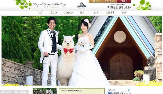 2A94CF8300000578-3163656-Hiring_an_alpaca_to_be_the_witness_at_your_wedding_is_one_of_the-a-21_1437050648964