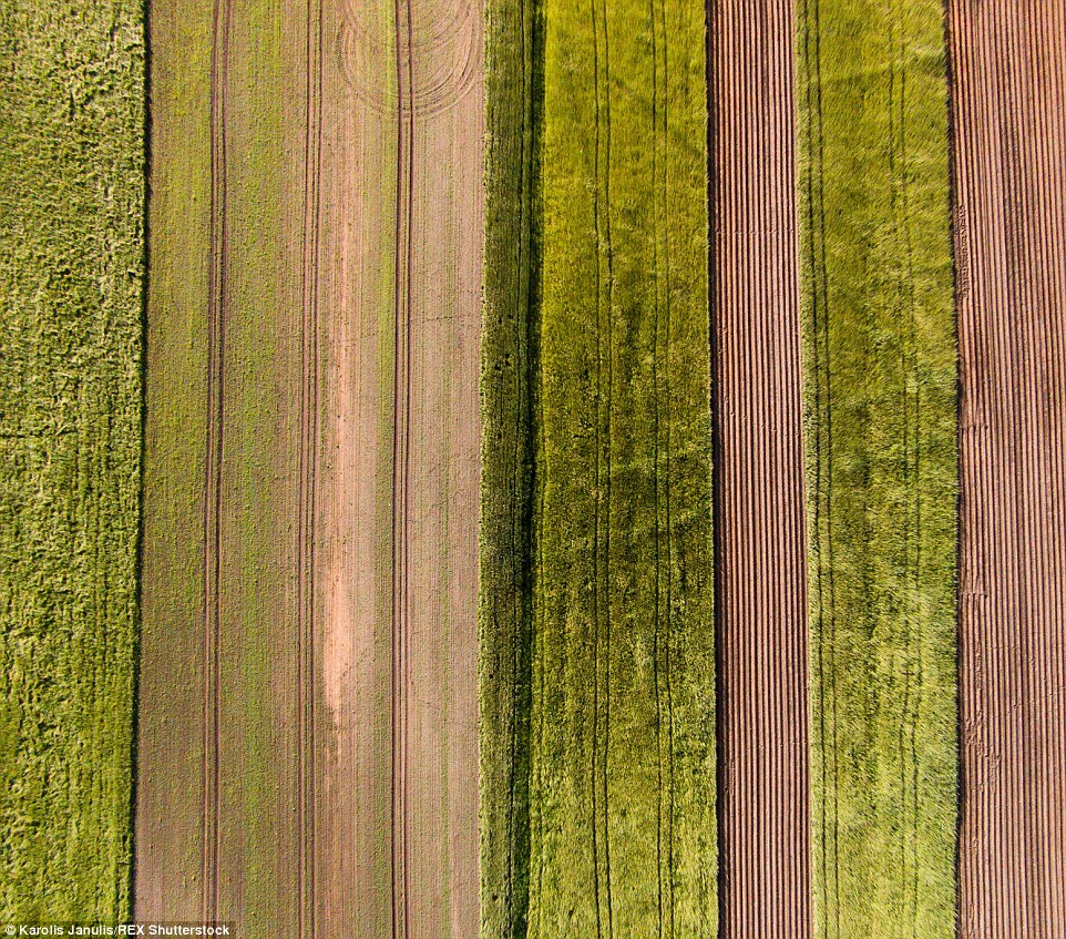 2ACC5B8A00000578-3173355-Colourful_fields_of_Lithuania_show_varying_shades_of_green_and_b-a-45_1437748383341