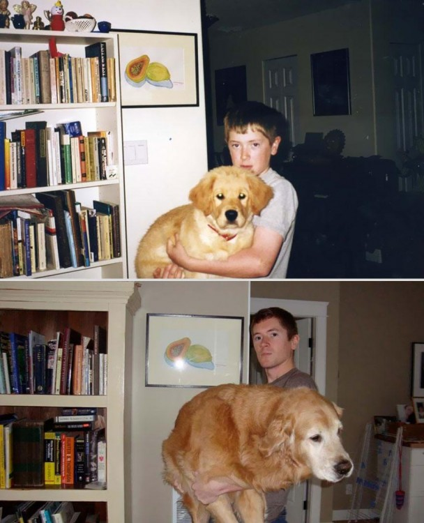 pets-before-after-22-608x750