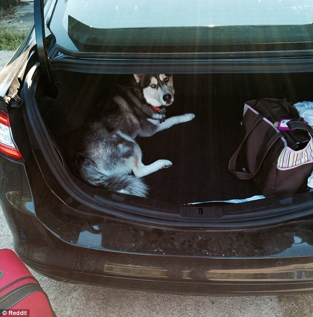 2BBBB5F700000578-3213977-This_dog_has_taken_matters_even_further_and_tried_to_stowaway_in-m-9_1440769142565