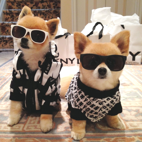 Cute-Dog-Costumes-Ideas-by-Marni-and-Cubby03