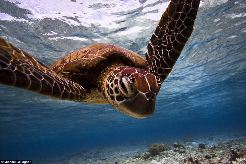 2C96C77400000578-3243126-Adult_runner_up_in_the_Deep_and_Meaningful_category_Turtle_Portr-a-7_1442831840302
