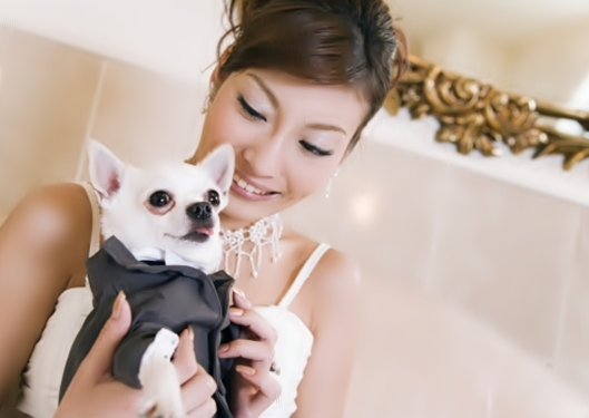 Bride and Chihuahua