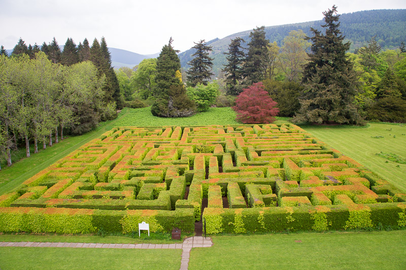 Mixed beech & evergreen maze viewed from house window
