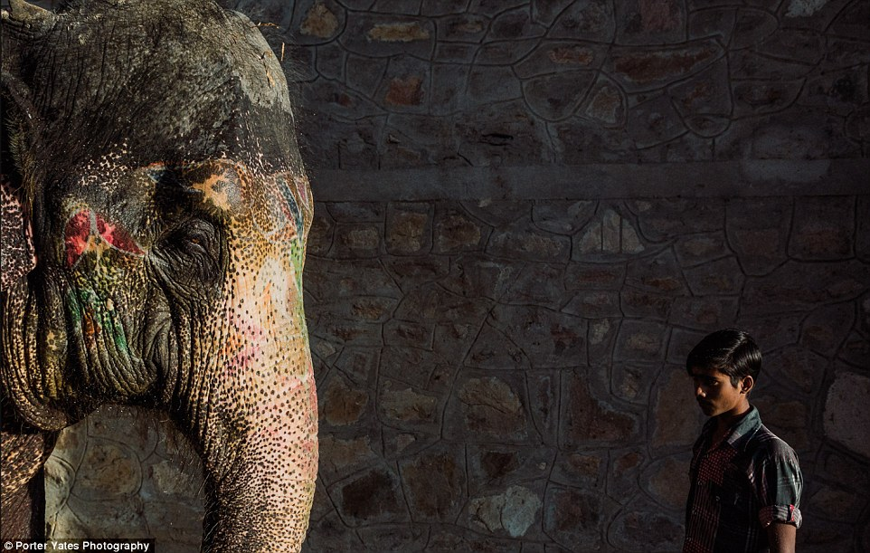 2D04B27300000578-3257757-A_boy_stands_with_an_elephant_at_an_elephant_village_in_Jaipur_I-a-87_1443800068160