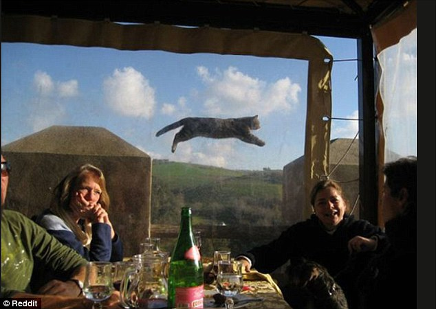 2D69AE4C00000578-3272515-Feline_high_A_relaxing_French_meal_was_upstaged_by_a_flying_cat-a-6_1444901514848