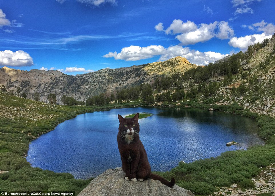 2D96EB7800000578-3281012-Pictured_on_the_Ruby_Mountains_in_Nevada_Burma_the_cat_is_the_in-a-22_1445349664729