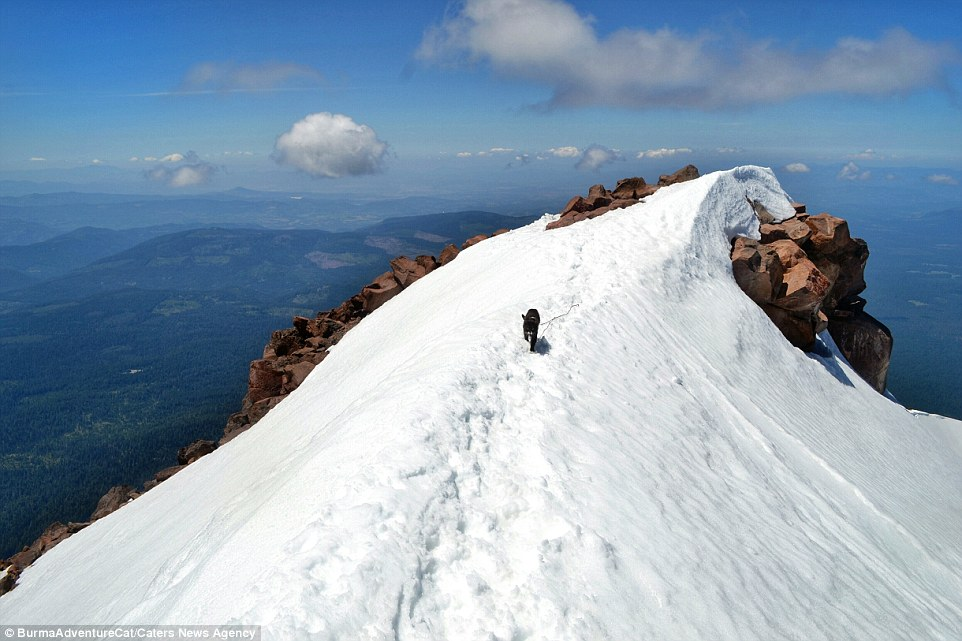 2D96EBC000000578-3281012-The_cat_pictured_on_Cascade_volcano_in_Oregon_doesn_t_know_the_d-a-21_1445349647806