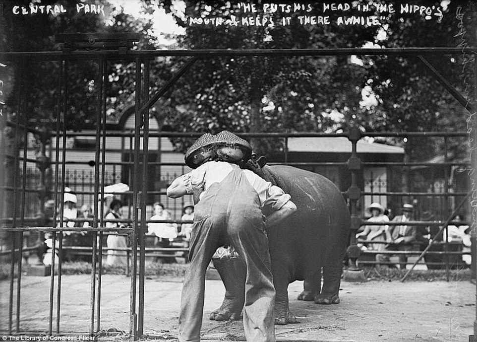 2DA0E0F400000578-3282754-Daring_Back_in_the_day_attractions_at_the_zoo_in_Central_Park_in-a-27_1445587040669