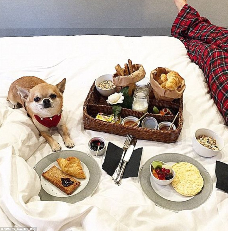 2DDFA05B00000578-3293523-The_minute_traveller_stays_in_pet_friendly_hotels_where_he_can_e-m-71_1446041913409