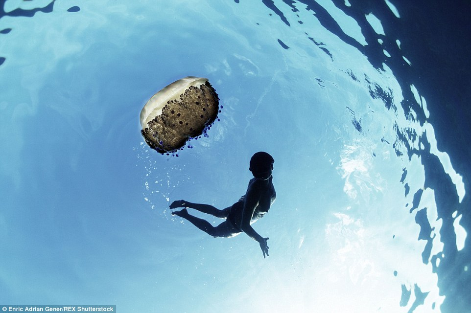 2E2BA07700000578-0-A_swimmer_spots_a_jellyfish_floating_nearby_in_the_ocean_Enric_s-a-70_1446818668461