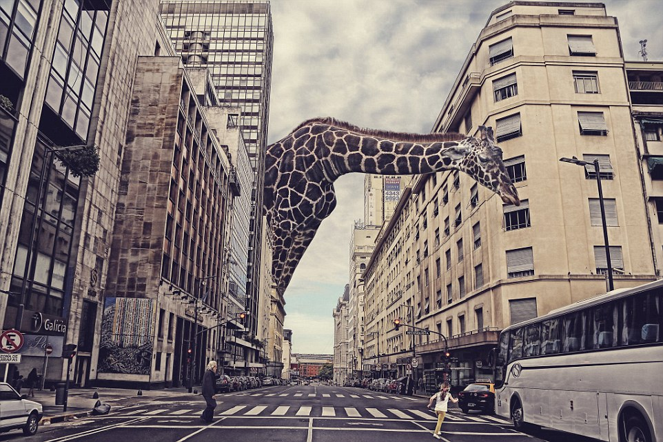 Digital Manipulation. A giant giraffe crossing Corrientes Avenue in Buenos Aires